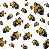 Modèle de triggerfish de titan, fond de viridescens de Balistoides Photo libre de droits