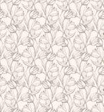 Modèle 1 de Tulps Photographie stock