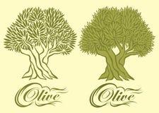 Modèle de vecteur avec l'olivier pour l'empaquetage Image libre de droits