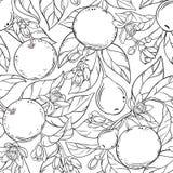 Modèle de vecteur de pamplemousse illustration stock