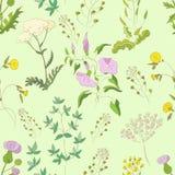 Modèle de Wildflowers Image libre de droits