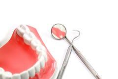 Modèle dentaire Photographie stock libre de droits