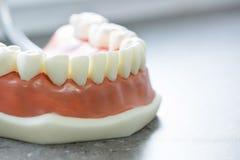 Modèle dentaire de mâchoire inférieure photo libre de droits