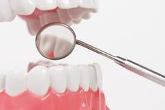 Modèle dentaire et outil dentaire photo libre de droits