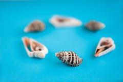 Modèle des coquillages marins sur un fond bleu Le concept de l'été et de la mer image stock