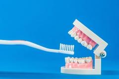Modèle des dents Photographie stock