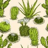 Modèle des différents cactus Image stock