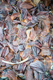 Modèle des feuilles Photos stock
