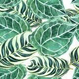 Modèle des feuilles de palmier bariolées d'isolement décoratives vertes Photographie stock