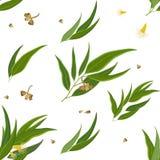 Modèle des feuilles, des fleurs et des graines d'eucalyptus Image stock