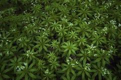 Modèle des plantes vertes formant le fond abstrait photo libre de droits
