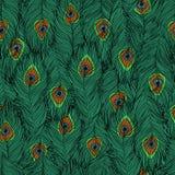 Modèle des plumes du paon Photo libre de droits