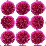 Modèle des roses Images libres de droits