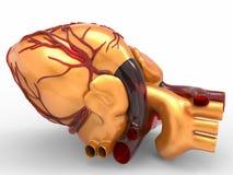 Modèle du rendu humain artificiel du coeur 3d Image stock