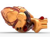 Modèle du rendu humain artificiel du coeur 3d Photos libres de droits