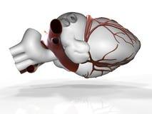 Modèle du rendu humain artificiel du coeur 3d Photographie stock