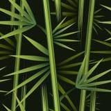 Modèle en bambou sans couture Photo libre de droits