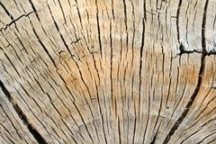 Modèle en bois d'arbre image libre de droits