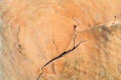 Modèle en bois de modèle d'arbre vieux et arbre en bois photo stock