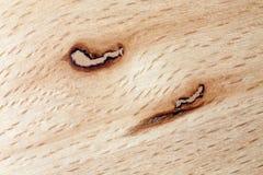Modèle en bois de hêtre Images stock