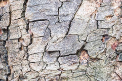 Modèle en bois extérieur de plan rapproché à la peau criquée du tronc du fond de texture d'arbre Image stock