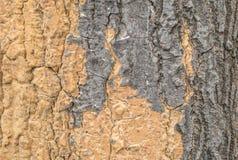 Modèle en bois extérieur de plan rapproché à la vieille peau criquée du tronc du fond de texture d'arbre Images stock