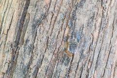 Modèle en bois extérieur de plan rapproché à la vieille peau criquée du tronc du fond de texture d'arbre Images libres de droits