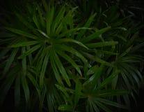 modèle en feuille de palmier sur le fond noir image stock