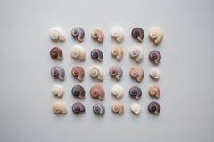 Modèle en spirale de coquillages sur le fond blanc d'en haut photos stock