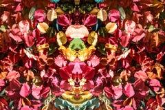 modèle et fond de fleurs colorés de vue supérieure Photos libres de droits