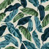 Modèle exotique sans couture avec les feuilles tropicales Photographie stock libre de droits