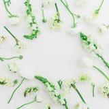 Modèle fait de fleurs blanches - ranunculus, muflier et tulipe sur le fond blanc Configuration plate, vue supérieure Cadre rond d Photos libres de droits