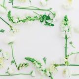 Modèle fait de fleurs blanches - ranunculus, muflier et tulipe sur le fond blanc Configuration plate, vue supérieure Vue des fleu Photographie stock