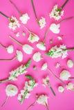 Modèle fait de fleurs blanches sur le fond rose Configuration plate, vue supérieure Fond floral Texture de modèle de fleurs Image stock