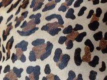 Modèle femelle de peau de léopard image stock