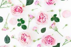 Modèle floral élégant fait de roses, bourgeons et feuille roses sur le fond blanc Configuration plate, vue supérieure Photos libres de droits