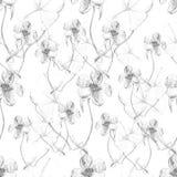 Modèle floral abstrait sans couture gris Photographie stock
