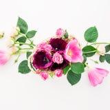Modèle floral avec des fleurs, des roses et des branches de tulipe d'isolement sur le fond blanc Configuration plate, vue supérie Images stock