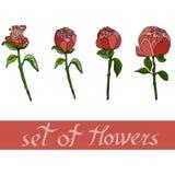 modèle floral avec des peones avec des éléments de conception Illustration de vecteur illustration de vecteur