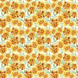 Modèle floral avec des soucis Patula, Tagetes photographie stock