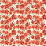 Modèle floral avec les soucis rouges originaux Patula, Tagetes image stock