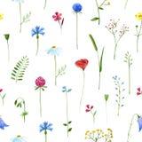 Modèle floral coloré avec les fleurs sauvages et les herbes illustration libre de droits