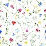 Modèle floral coloré avec les fleurs sauvages et les herbes Image libre de droits