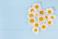 Modèle floral d'été avec la fleur de camomille au-dessus du fond en bois de vintage bleu-vert Photo stock