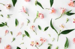 Modèle floral de configuration plate fait en alstroemeria rose, feuilles, pétale Photographie stock libre de droits