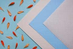 Modèle floral de fond bleu-clair Photos stock