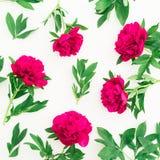Modèle floral de pivoine et de feuilles sur le fond blanc Configuration plate, vue supérieure Modèle fait de fleurs Photographie stock