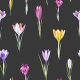 Modèle floral de vecteur de crocus d'aquarelle Photographie stock