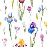 Modèle floral de vecteur d'aquarelle Photographie stock libre de droits