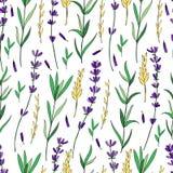 Modèle floral de vecteur sans couture, fleur colorée tirée par la main de lavande, texture décorative, croquis d'isolement sur le Photographie stock libre de droits